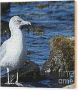 Mystic Seagull Wood Print