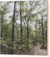 Mystical Wood Print