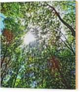 Mystical Forest Sky Wood Print
