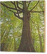 Mystical Forest Tree Wood Print