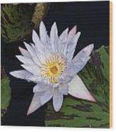 Mystical White... Wood Print