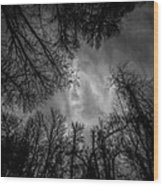 Naked Branches Wood Print