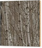 Naked Trees Wood Print