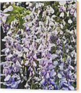 Nancys Wisteria Cropped Db Wood Print by Rich Franco