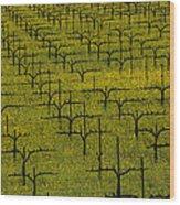 Napa Mustard Grass Wood Print by Garry Gay