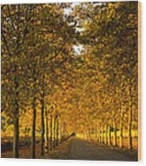 Napa Valley Fall Wood Print by Bill Gallagher