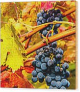 Napa Valley Grapes, California Wood Print
