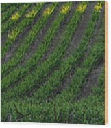 Napa Valley Vineyard Wood Print