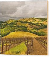 Napa Vineyard Wood Print