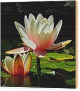 Napa Water Lilies 003 Wood Print