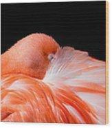 Napping Flamingo Wood Print