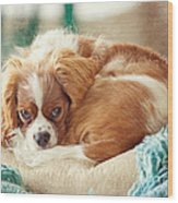 Napping Puppy Wood Print by Kay Pickens