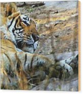 Naptime For A Bengal Tiger Wood Print