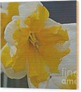 Narcissus 014-1 Wood Print