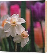 Narcissus And Tulips Wood Print