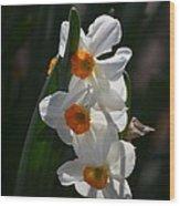 Narcissus Evening Glow Wood Print