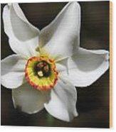 Narcissus I Wood Print by Aya Murrells