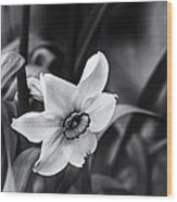 Narcissus In The Shadows Wood Print
