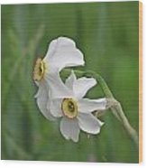 Narcissus Pair Wood Print