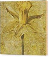 Narcissus Pseudonarcissus Wood Print