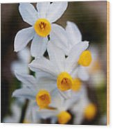 Narcissus Tazetta Wood Print
