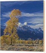 Narrowleaf Cottonwoods Fall Color Teton Wood Print