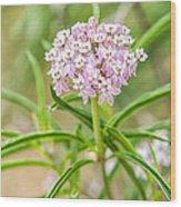 Narrowleaf Milkweed Wood Print