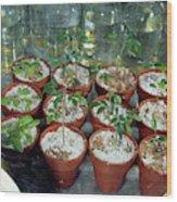 Nasa Germ Free Plant Research Wood Print