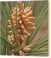 Nascent Pinecone Wood Print