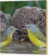Nashville Warblers Vermivora Ruficapilla Wood Print