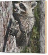 Nasty Raccoon In A Tree Wood Print