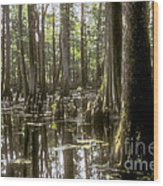 Natchez Trace Wetlands Wood Print