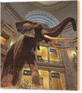 National Museum Of Natural History Wood Print