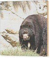 National Zoo - Bear - 12121 Wood Print