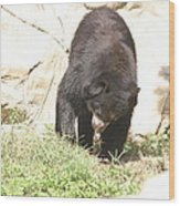 National Zoo - Bear - 12123 Wood Print by DC Photographer