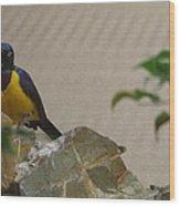 National Zoo - Birds - 01137 Wood Print
