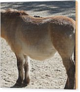 National Zoo - Donkey - 01134 Wood Print by DC Photographer