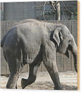 National Zoo - Elephant - 12126 Wood Print by DC Photographer
