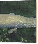 National Zoo - Fish - 12125 Wood Print