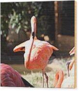 National Zoo - Flamingo - 01133 Wood Print by DC Photographer