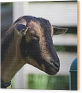 National Zoo - Goat - 01132 Wood Print by DC Photographer