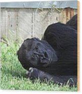 National Zoo - Gorilla - 011339 Wood Print