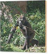 National Zoo - Gorilla - 121220 Wood Print