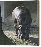National Zoo - Hippopotamus - 12121 Wood Print