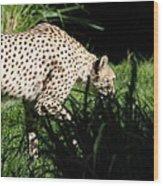 National Zoo - Leopard - 011311 Wood Print