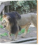 National Zoo - Lion - 011311 Wood Print by DC Photographer
