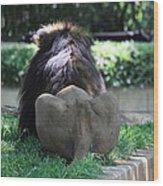 National Zoo - Lion - 011314 Wood Print