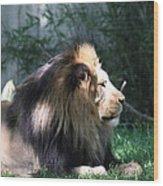 National Zoo - Lion - 011318 Wood Print