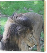 National Zoo - Lion - 01132 Wood Print by DC Photographer