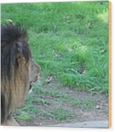 National Zoo - Lion - 01134 Wood Print by DC Photographer